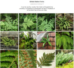 This is a screen grab of the British Native fern album on Facebook